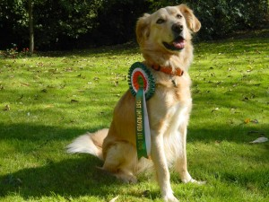 A year after he arrived from Ireland, Sparks won the Most Improved Dog rosette at the IRR reunion.