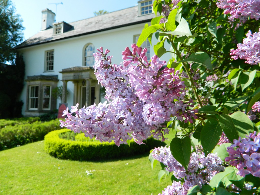 These lovely lilacs were at Avebury in Wiltshire.