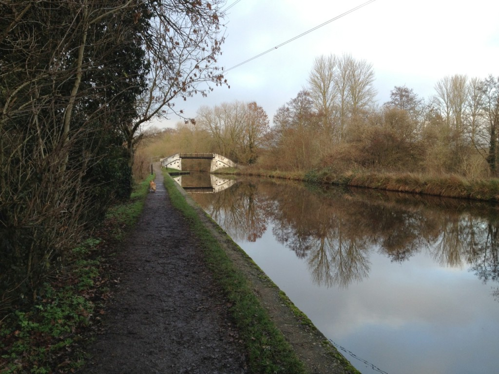 Just before the bridge, we normally turn into the woods, but the footpaths were flooded.
