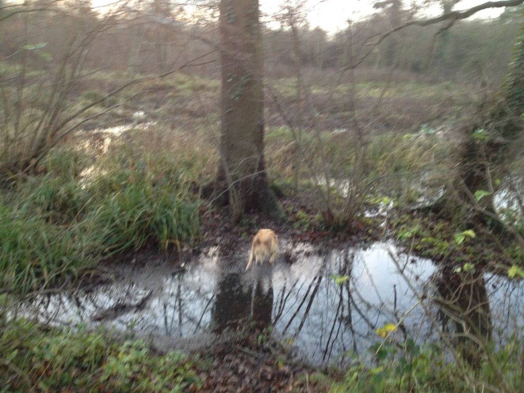 But it didn't deter the dog, who leaped over the water after checking the trees for squirrel activity.